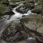 Hamakua Stream