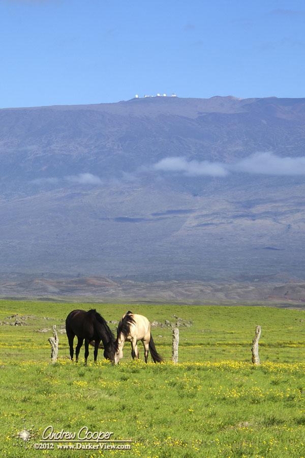 Waimea Pasture