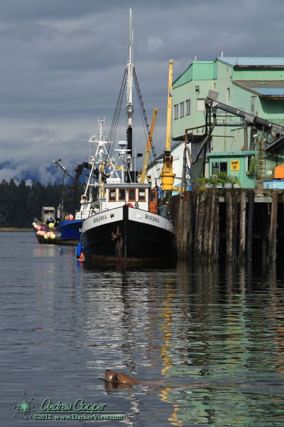 A fishing boat offloads fish at the packing plant in Petersburg, Alaska