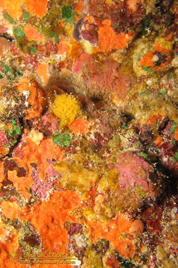 Sponge Wall