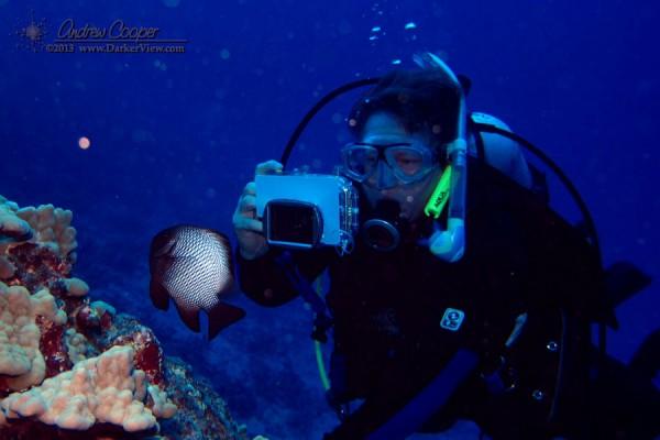 eb Photographing a Dascyllus