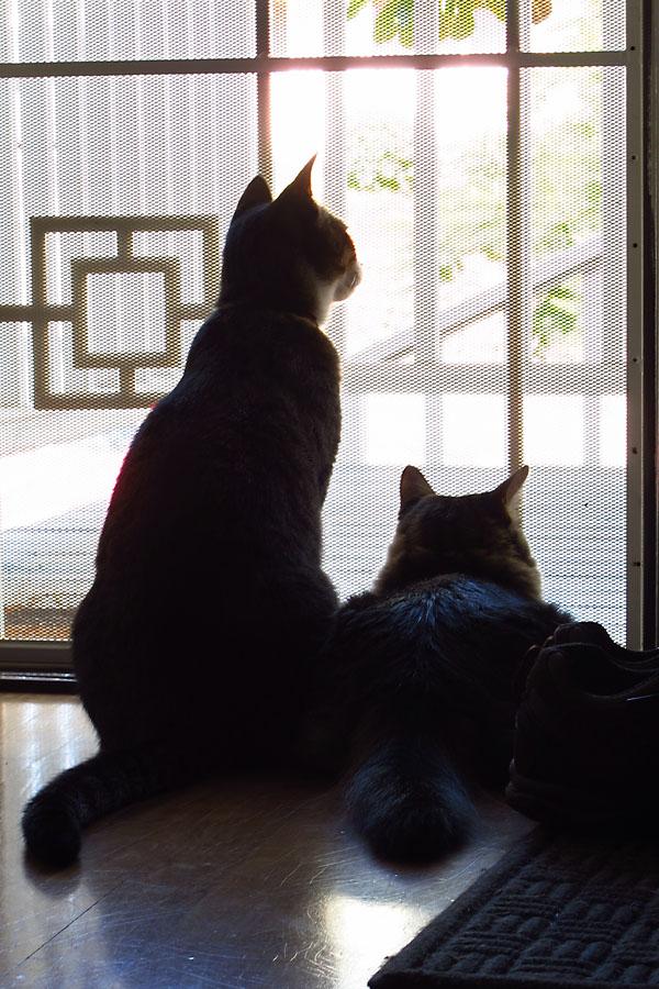 Cats at the Door
