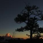 Ohia and Sunrise