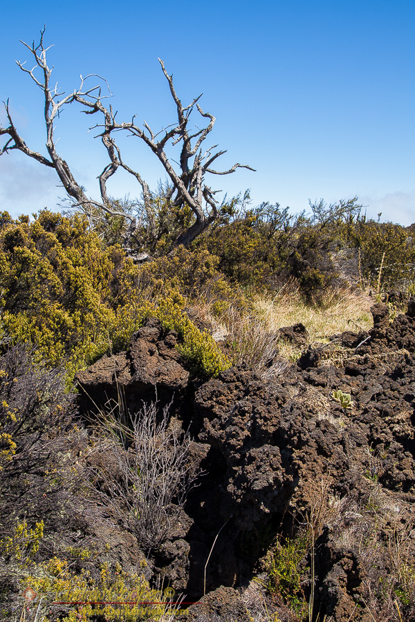 Aʻa Lava Field