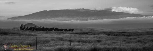 Mauna Kea Looms