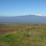 Hualalai from Kilohana