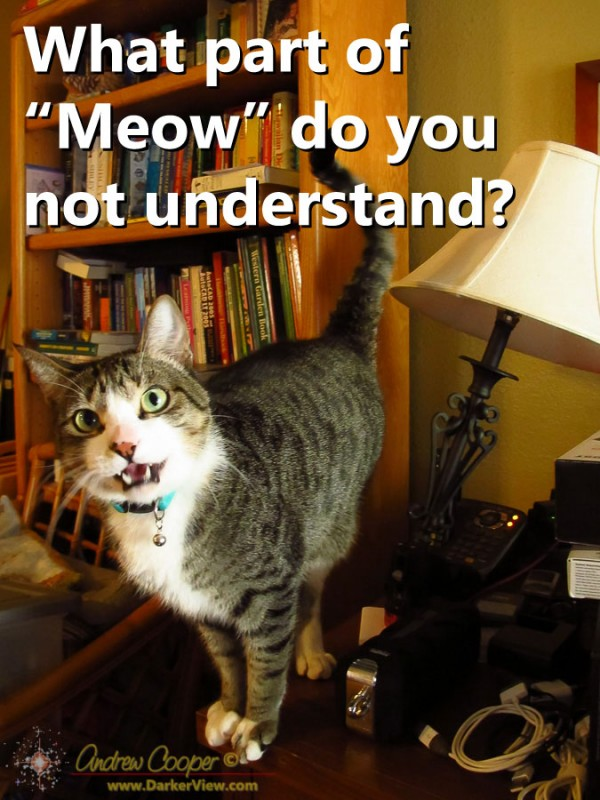 What part of Meow do you not understand?