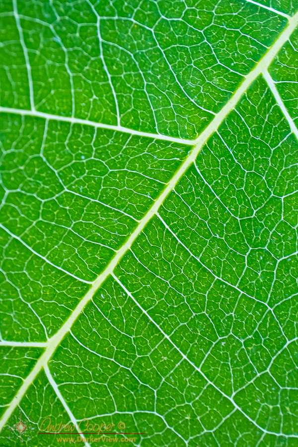 Macro view of a leaf
