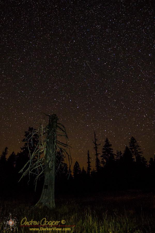 Grant's Spring Under Stars