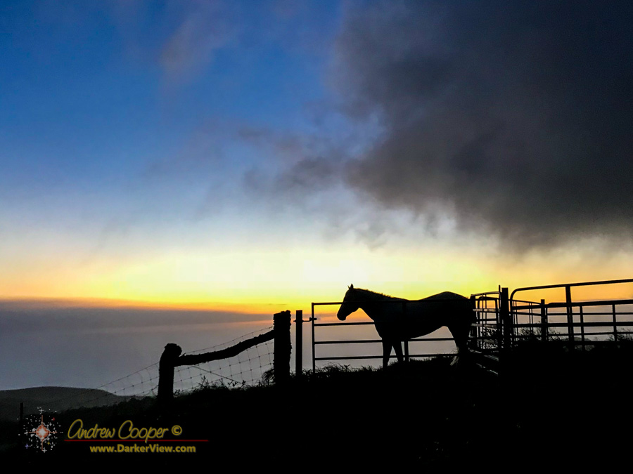 A horse stands in the sunset at Kahua Ranch