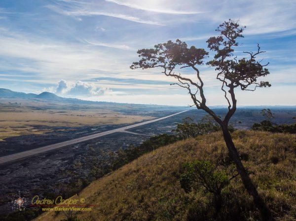 A koa tree atop Pu'u Huluhulu
