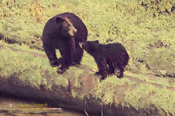 A mother black bear and cub at Anan Bear Observatory, Alaska