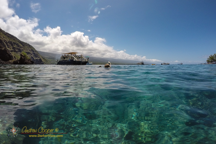Snorkeling in the waters of Kealakekeu Bay